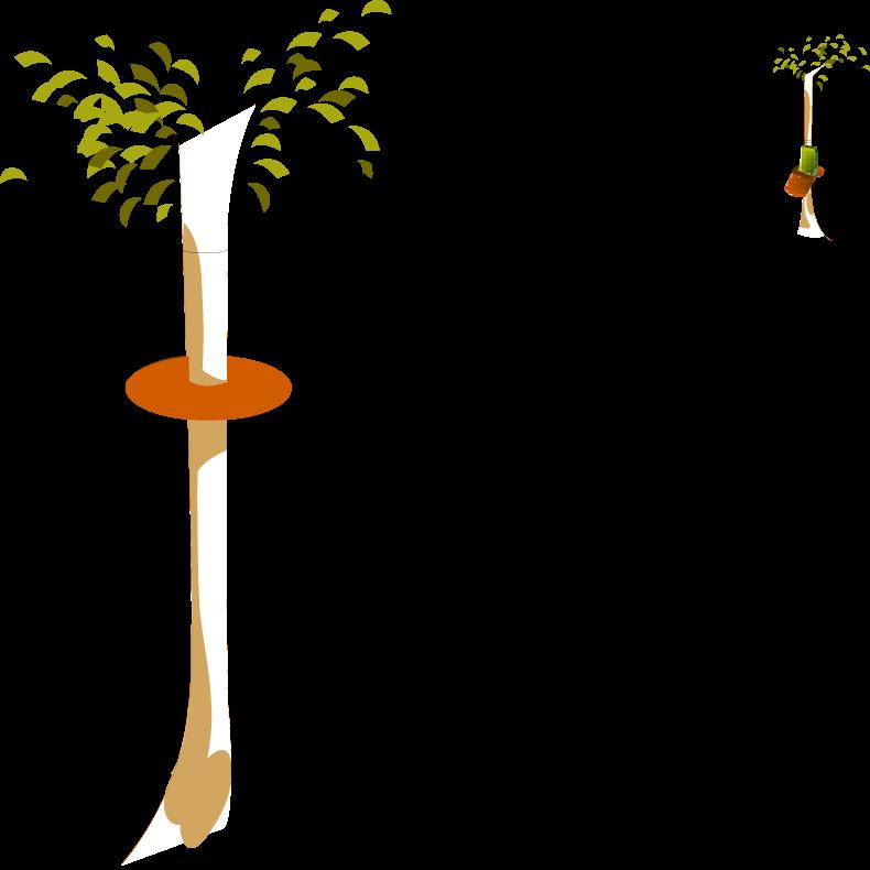 Tiroliana